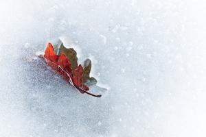 Efterår & Vinter