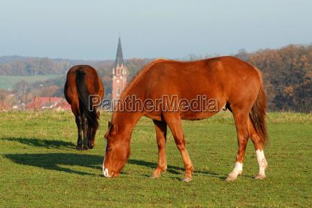 houses church city town ride horse