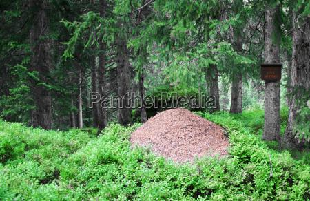 bau ameisenbau kroendlhorn volk ameisenvolk bewachsen