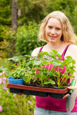 gardening plants strawberries