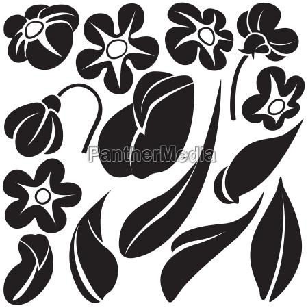 hoja flor planta silueta las plantas