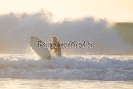 body surfer riding a perfect wave