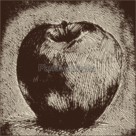 digital vector detailed apple hand drawn