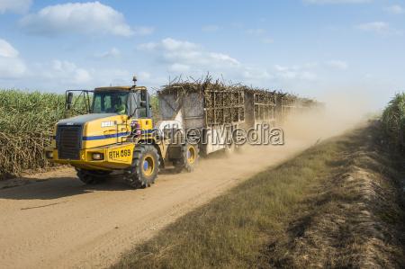trafico africa agricultura horizontalmente transporte azucar