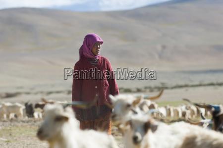 rebeca paseo viaje color asia cabra