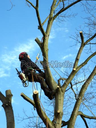 cases of an oak tree in