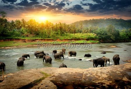 paseo viaje enorme bio medio ambiente